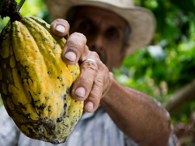 Pomona Impact Cacao